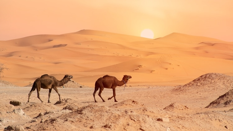 The Sahara Desert which is a top destination for travelers in Morocco